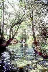 canoe in the jungles of the Mayan Riviera frogs
