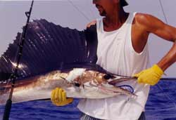 deep sea fishing is popular south of cancun mexico